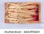 ginseng   Shutterstock . vector #666390664