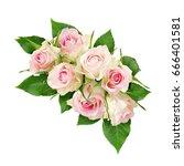 beautiful white rose flowers... | Shutterstock . vector #666401581