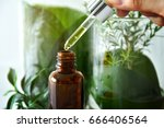 scientist with natural drug... | Shutterstock . vector #666406564