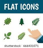 flat icon nature set of alder ... | Shutterstock .eps vector #666431071