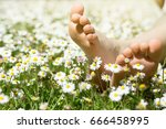 child's feet in daisy closeup... | Shutterstock . vector #666458995
