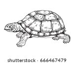 turtle raster illustration.... | Shutterstock . vector #666467479