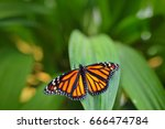 Stock photo monarch danaus plexippus butterfly in nature habitat nice insect from mexico butterfly in the 666474784