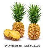 pineapple isolated. whole and... | Shutterstock . vector #666503101