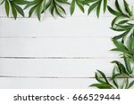 angled frame of green leaves on ... | Shutterstock . vector #666529444