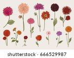 dahlias set. botanical vector... | Shutterstock .eps vector #666529987