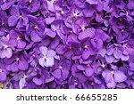 Purple Vanda Orchid Wall...
