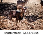baran in a natural park | Shutterstock . vector #666571855
