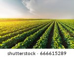 agricultural soy plantation on ... | Shutterstock . vector #666615289
