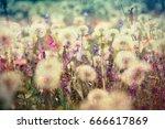 beautiful meadow   flowering ... | Shutterstock . vector #666617869