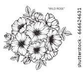 bouquet of roses flowers... | Shutterstock .eps vector #666624631
