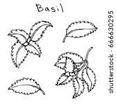 set of green basil herb branch... | Shutterstock .eps vector #666630295