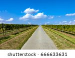 road trought the vineayrd | Shutterstock . vector #666633631