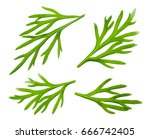 dill. fresh dill collection... | Shutterstock . vector #666742405