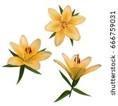 realistic vector flowers set....