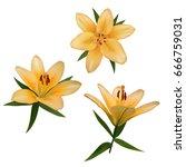 realistic vector flowers set.... | Shutterstock .eps vector #666759031