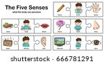 five senses   touch  taste ... | Shutterstock .eps vector #666781291