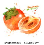 watercolor illustration of... | Shutterstock . vector #666869194