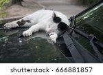 White And Black Cat Sleeps On...