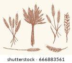 wheat ears sketch doodle ... | Shutterstock .eps vector #666883561