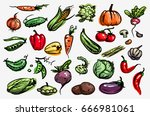 vegetable set.  vector. corn ... | Shutterstock .eps vector #666981061