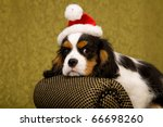 cavalier puppy with santa hat | Shutterstock . vector #66698260