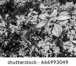 black and white moody contrast... | Shutterstock . vector #666993049