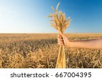 Small photo of the man holding the ripened gold cones of wheat on blue sky and wheat field background. agriculture, agronomics, food, organic, harvest concept. production of wheat.