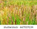 weeds waving in the wind | Shutterstock . vector #667019134