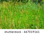 weeds waving in the wind | Shutterstock . vector #667019161