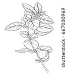 adult coloring page book a... | Shutterstock .eps vector #667030969