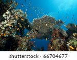 tropical marine life in the red ... | Shutterstock . vector #66704677