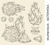 collection of pitaya fruit ... | Shutterstock .eps vector #667054561