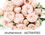 beige rose buds bouquet on... | Shutterstock . vector #667064581