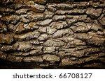 Texture   A Bark Of An Old Oak