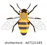 honey bee illustration | Shutterstock .eps vector #667121185