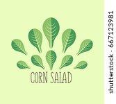 corn salad leaf vegetable... | Shutterstock .eps vector #667123981