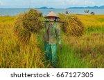 hoi an  vietnam   august 19 ... | Shutterstock . vector #667127305