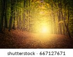 sunny nature fall season at the ... | Shutterstock . vector #667127671