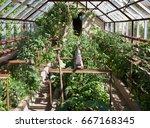 natural small garden greenhouse ... | Shutterstock . vector #667168345