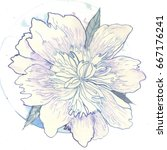 peony flowers   Shutterstock . vector #667176241