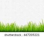 green grass meadow border... | Shutterstock .eps vector #667205221