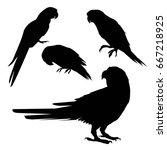 silhouette parrot  vector ... | Shutterstock .eps vector #667218925