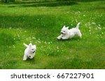 white fluffy cheerful happy... | Shutterstock . vector #667227901