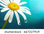 flower daisy close up macro... | Shutterstock . vector #667227919