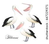 Vector With Graceful Pelicans...