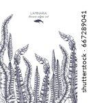ink hand drawn laminaria sketch ... | Shutterstock .eps vector #667289041