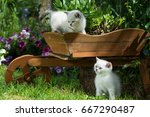 Stock photo playing kitten 667290487