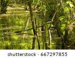 Forest Stream Running Through...