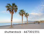 Palm Trees And Benches On A...